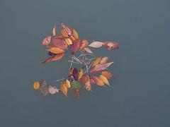 Yoyogi Koen, Tokyo, Japan (EgoEye) Tags: park autumn color colour fall water leaves japan season japanese tokyo leaf asia sunday float eastasia yoyogikoen