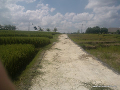 land for sale near seseh beach bali indonesia (franky_ok2) Tags: bali beach indonesia near free agency buy hold reservation kuta seseh