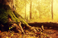 Gnomish Paradise (Studio Yuki) Tags: fairytale forest woodland golden woods dreamy magical enchantedforest fineartphotography magicaltree fairytalephotography