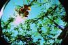 Há metafísica bastante em não pensar em nada (thaíslehmann) Tags: flowers summer sky sun green nature colors lomo lomography experiment fisheye poesia literatura filosofia fernandopessoa albertocaeiro metafísica fotopoesia