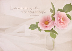 whispers of hope (✿ *•.。.☆•CAH•☆.。.• * ✿) Tags: pink roses texture soft pretty romantic dreamy wisdom pinkrose wisewords pictureswithwords rosestilllife