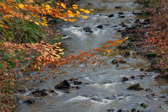 Day 291 - Autumn stream (Ben936) Tags: autumn fall water misty river flow rocks stream stones beech whispy leavesturning babblingbrook goldenleaves