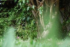 uma casa  beira sol (Martin Pulaski) Tags: life travel holiday love portugal photography lagos september imagination algarve tavira 2012 autobiography lovepower martinpulaski