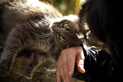 Love (Albyphoto) Tags: love cat chan huge neko pure gatto amore nekochan carezza fusa affetto tigrato civezza strofinarsi