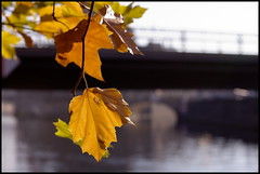 Spreewalk #2 (thinkfat (catching up)) Tags: autumn berlin colors leaves canon river deutschland wasser walk herbst stadt fluss spree sonne blätter 2012 farben spaziergang bodemuseum sonnenbad ef70200mmf28is eos5dmarkii