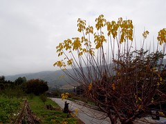 Grey skies, grey world   /  Mundo gris (Benissiva Calling (slow, but around )) Tags: autumn landscape paisaje olympus otoo gloom valldegallinera xz1