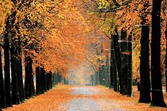 Waterbergseweg, Arnhem (marcoderksen) Tags: november arnhem herfst 2012 moscowa waterbergseweg