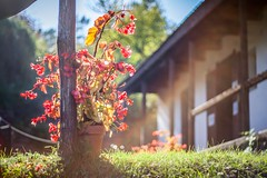 Autumn's light.. (icemanphotos) Tags: pink flowers blue autumn trees sky house flower green colors grass interesting rainbow bokeh canonautumn icemanphotos
