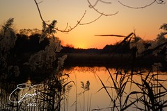 oyaMAM_20121117-173207s5 - Orange Sky, Reeds and Water (MichaelAPMayo) Tags: nature photography riverhead oyamam oyamaleahcim