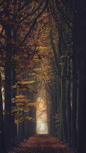 Tel' men a' i' kalina (Explore #1, 20.11.2012) (Mathijs Delva) autumn trees light brown green nature leaves yellow forest vanishingpoint woods woodlands colours dof geometry depthoffield lane 100mmf28macro featuredonadidapcom