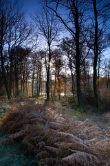 Where We Call Home 6 (TheFFK) Tags: morning trees sunlight woodland woods hampshire ferns newforest sunshafts