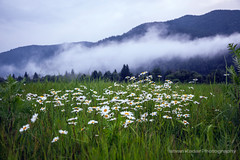 Simplicity of the Unaffected Air (fesign) Tags: flowers trees sunset summer plants cloud mist nature grass fog stone landscape evening scenery scenic hills valley daisy transylvania simple erdly carpathianmountains tusnad kovsznacounty