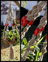 Bloody Mary Handmade Natural Jute Macrame Plant Hanger (Macramaking- Natural Macrame Plant Hangers) Tags: red plants plant green hippies garden fun beads colorful basket natural gardening handmade oneofakind character rustic cottage fluffy craft northcarolina funky retro delicious gift hanging americana crown fengshui flowing spicy chic cheerful boho planter majestic groovy hang bloodymary bohemian homedecor hanger eyecandy macrame chunky provincial redberry madeinusa ecofriendly conversationpiece hangingbasket oblong jute officedecor hangingbaskets bohochic containergardening planthanger alternating planthangers hangingplanter macramebeads decorativeknotting macrameplanthanger macramakin macramaking httpwwwetsycomshopmacramaking macramecord macrammacramaking herbhanger naturaljute macrametechnique chinesecrownknots macramehangingbasket macrameweaving macramelove