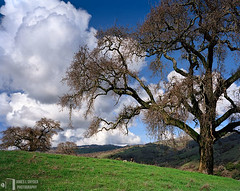 Graceful Oaks and Glorious Clouds (James L. Snyder) Tags: california ranch park old trees winter usa brown foothills green grass horizontal clouds rural cool oak quercus afternoon bright native bare branches country smooth sanjose sunny bluesky fresh hills ridge glorious pasture valley cumulus bayarea trunk strong verdant february lush soaring deciduous hillside oaks pastoral grassland majestic puffy refreshing graceful chiaroscuro idyllic looming colossal slope rolling bucolic towering 2007 luxuriant dormant lofty outstretched uplifting santaclaracounty countypark billowy churning surging diablorange frontlighting josephgrantcountypark hallsvalley washburntrail treesonhills