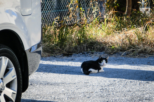 Today's Cat@2012-11-27