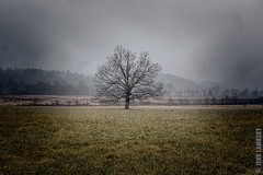 My favorite tree (Jens Lambert Photography) Tags: park mountains tree rain clouds canon landscape photography photo photos cove jens national 5d smoky lambert cades mkiii