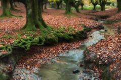 Musgo y hojas (_Tera_) Tags: autumn naturaleza tree verde green nature water rio landscape arbol agua nikon colours natural paisaje colores bosque 1750 otoño longview tamron haya hayedo tamron1750 d5000 efectoseda otzarreta nikond5000 tamron175028vc bosibosi