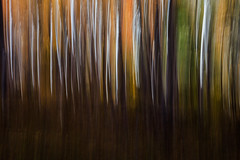 Colorful Aspen in Motion (Jeffrey Sullivan) Tags: california travel copyright usa abstract fall jeff nature colors canon landscape photography photo sierra sullivan eastern 2012 easternsierra visitca visitcalifornia 5dmarkiii visitmonocounty visiteasternsierra