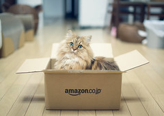 Ready to Ship (torode) Tags: cute cat persian amazon box packing cardboard delivery shipping shallowdof amazoncojp ififitsisits