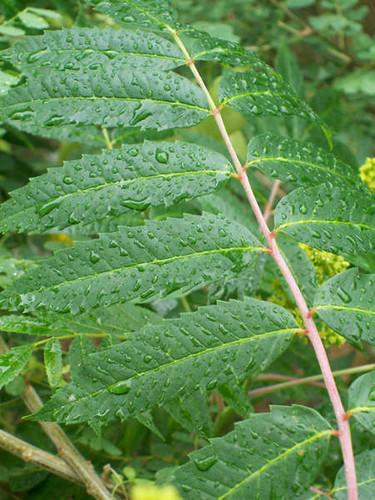 Photo - Wet Ferns