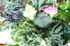 97th Street GreenMarket December 7, 2012 CLS_6197 (smith_cl9) Tags: street new york city nyc newyorkcity fall vegetables nikon october december manhattan grow 7 crop upperwestside greenmarket veggie nikkor vr sensor uws 2012 dx rapini broccoletti purplecauliflower brassicaoleracea f3556g broccolirabe 97th fractalbroccoli romanescobroccoli apsc cavolonero romancauliflower tuscankale dinosaurkale 18105mm redkale d7k d7000 capitatagroup tuscancabbage grownyc farmersmarketgreenmarket broccolirabé cabbagebrassicaoleracea