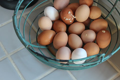 from the birds themselves (jessica wilson {jek in the box}) Tags: 2012 nov12 ohmy notmyhome hoemgrowngoodness prettineswithamy eggsandapples
