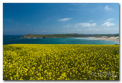 Crantock gold (Simon Bone Photography) Tags: sea seascape beach coast sand cornwall newquay cliffs coastal coastline rapeseed beachscape crantock westpentire wwwthehidawaycouk canoneos7d canonef1740mmlf4 eastpentire