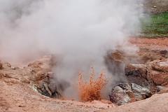 Yellowstone National Park  (syue2k) Tags: usa wyoming state  yellowstone national park