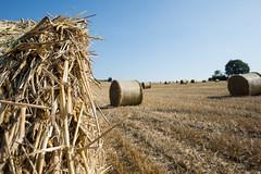 Natur52 (flo.niegel) Tags: natur ernte heuballen korn erntezeit