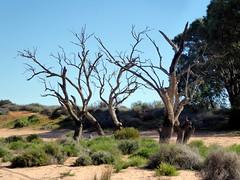 2016-08-17  - Dry Menindee Lake - 2 (Ian Granland) Tags: menindeelake westernnswaustralia menindee
