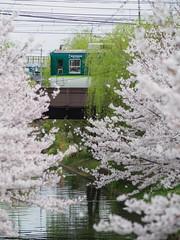 P4050988 (slipper55) Tags:    japan train railways    sakura m43 75mm keihan   kyoto  fushimi