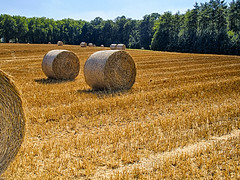 Harvest (enneafive) Tags: cereal wheat straw harvested stubbles yellow green trees sky blue light