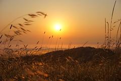 Russian Ridge Sunset (Olivier Tardy) Tags: sunset pacific ocean clouds sea grass summer skyline california