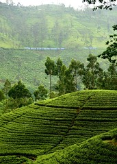 Train in the Hills (Gane) Tags: train tea estate teaestate plantation railway