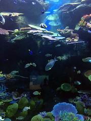 bangkok_188 (OurTravelPics.com) Tags: bangkok fish ocan tunnel sea life ocean world