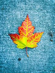 And so it begins... (PEEJ0E) Tags: autumn fall leaf color ground season orange yellow