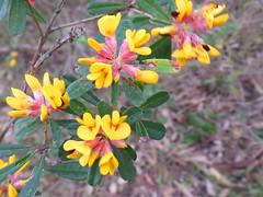 Sunny spring time (jo.elphick) Tags: burrill lake nsw australia
