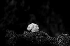 snail shell or a smurf cap , i don't now !?! (raimundl79) Tags: wow white blackwhite blackandwhite bestpicture nikon nikond800 snailshell schneckenhaus schwarzweiss exploreme explore entdecken explorer flickrexploreme flickrr fotographie follow4follow foto schlumpf smurf
