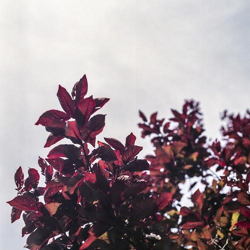 Summer branches - part 11
