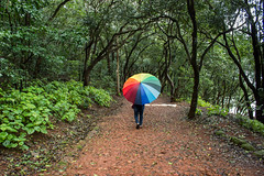 Matheran-4939 (Satish Chelluri) Tags: satishchelluri satishchelluriphotography matheran maharastra umbrella mansoon