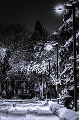 november 07a (LK_335) Tags: life street city november trees winter white snow cold tree students night ir student university edmonton pentax lifestyle fresh le alberta fallen serenity infrared faux roads f18 wonderland limited smc ltd processed 07 fa uofa 2012 k5 wintery universityofalberta 77mm fauxinfrared smcpfa77mmf18 infraredfaux november72012