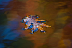 Autumn Rhythms (Jeff Rose Photography) Tags: autumn lake abstract fall water leaf arkansas ripples petitjeanstatepark jekaworldphotography jeffrosephotography