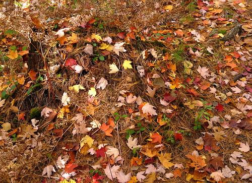 How come when Nature litters it's so pretty?