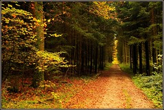 Forêt de Bellmund (jd.echenard) Tags: wood autumn trees light forest automne licht lumière herbst arbres leafs wald farbe bäume feuilles lueur mfcc herbstfarben colorsofautumn flickrdiamond fabuleuse forê couleursd'automne