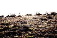 rocking on the ridge - part one (cyberjani) Tags: sea island adriatic vir esenciadelanaturaleza badmanproduction
