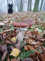 Waldsee Hermsdorf (judith74) Tags: november autumn berlin fall fog landscape nebel herbst natur hund ufer landschaft pilz reinickendorf hermsdorf waldseehermsdorf