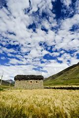 72__DOL4794 (David Ducoin) Tags: nepal nationalpark asia np himalaya dolpo dunai ducoindavid tribuducoin sheyphoksumdo