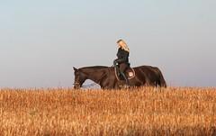Over The Stubble Field (ivlys) Tags: autumn nature germany herbst rider odenwald stubblefield neutsch stoppelfeld reiterin ivlys