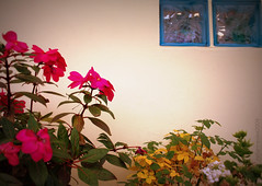 """flowers in the porch 47/52 """"primary"""" (Raf Degeest Photography) Tags: flowers stilllife canon primary 2012 week47 522012 52weeksthe2012edition weekofnovember18"""