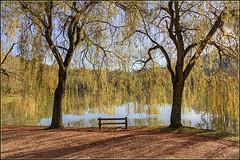 Rideau de verdure .... au lac de Chasteaux en Corrze (lo46) Tags: france automne lac arbres paysage banc feuilles corrze limousin carpediem brive saulepleureur lo46 canon60d chasteaux lacdechasteaux betterthangoodlevel3 artistoftheyearlevel2